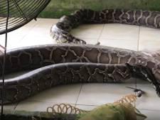 Des images glaçantes filmées dans un élevage de serpents tués pour leur peau