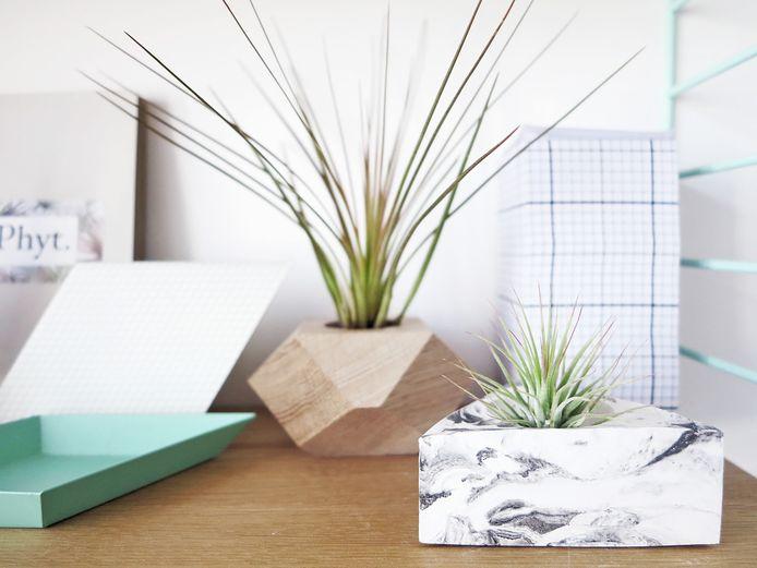 Epifyten ofwel air plants