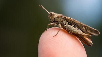 Meisje (8) publiceert paper over insecten in wetenschappelijk tijdschrift