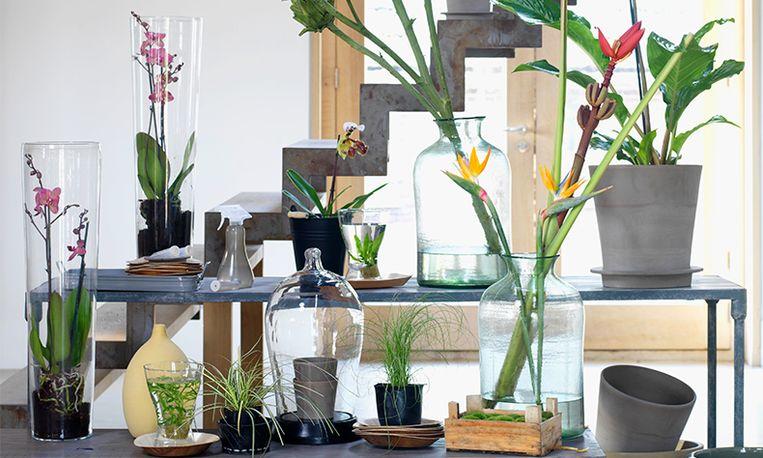 Revival: huis vol planten