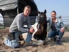Dankzij paardencoach toch op vakantie met een eetstoornis