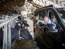 In de auto op koe-safari in Deurningen: 'Ik wil nog een keer!'