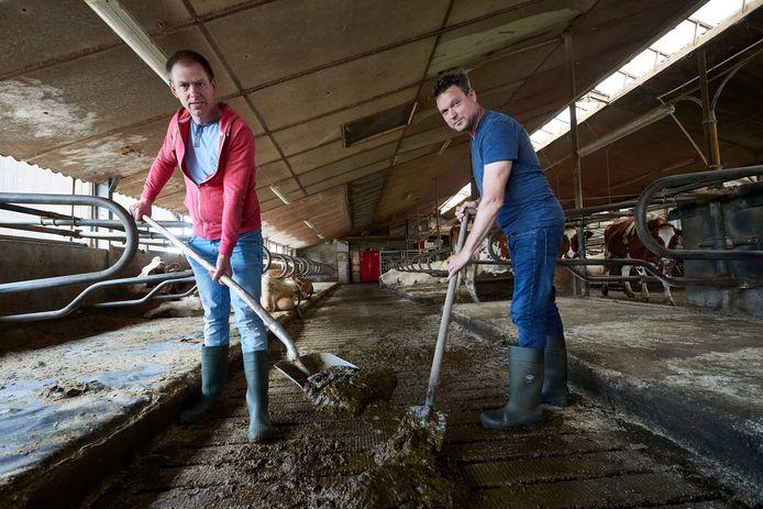 Robert Haijtink (rechts) en Diederik Klein Kranenbarg (links) scheppen mest, volgens hen in potentie een bron voor duurzame energie.