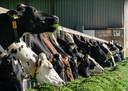 De koeien van boer Eijkelenboom krijgen een verse lading gras.