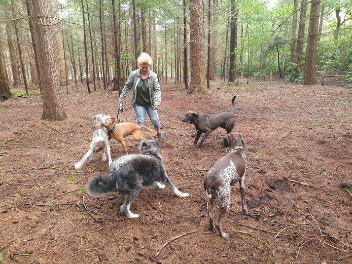 De nieuwe hondenlosloopzones in Meerle worden geapprecieerd door de viervoeters. De vrijwilligers van Natuurpunt maakten de twee losloopzones en de stad betaalde het materiaal.