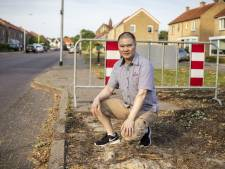 In deze straat in Oldenzaal zijn eiken met eikenprocessierups gekapt