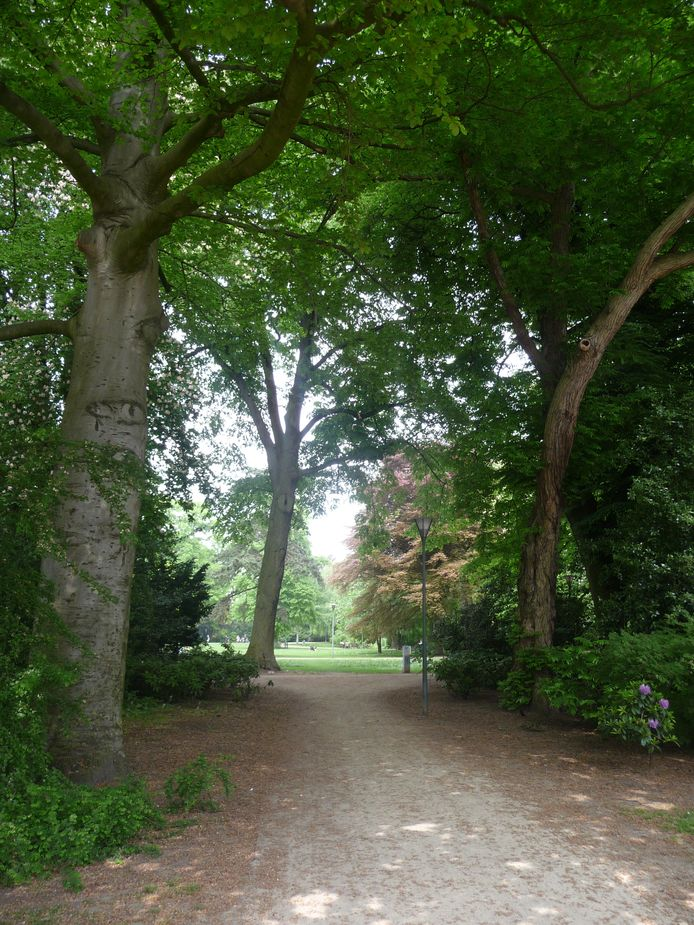 Het Wilhelminapark