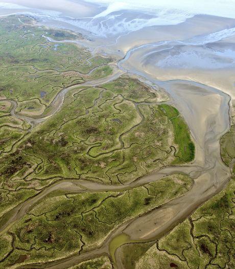 'Leg geen megabos in Zeeland aan, maar laat het water zelf nieuw land opbouwen'