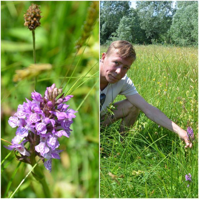 Links één van de meer dan duizend wilde orchideeën die in de Buylaers in bloei staan. Rechts coconservator Christophe Hillaert.