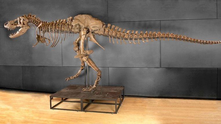 Een skelet van een t-rex in Las Vegas. Beeld ANP