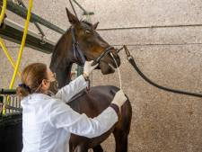 KNHS hoopt paarden zo snel mogelijk in Nederland terug te krijgen