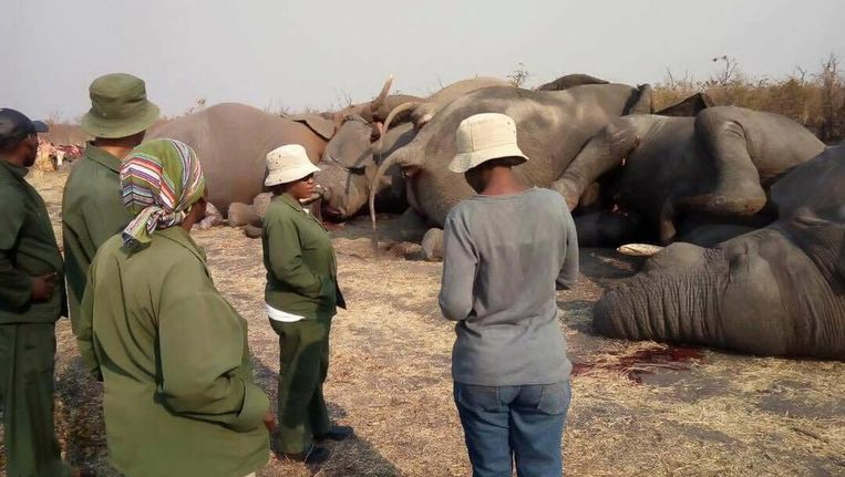null Beeld Facebook - Elephants Without Borders