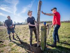 Slechts handjevol schapenhouders Veluwe neemt wolfwerende maatregelen: 'Ze kijken kat uit boom'