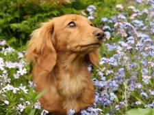 Le sort étonnant d'un chien retrouvé sept ans après