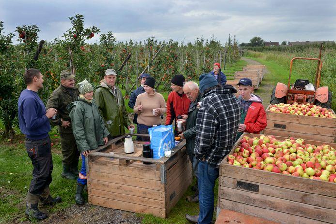 Fruittelers werken in de oogsttijd vaak met seizoenskrachten uit het buitenland die ze graag op het eigen terrein willen huisvesten. Daarvoor moeten de regels voor het buitengebied versoepeld worden. Deze archieffoto werd niet in Etten-Leur gemaakt.