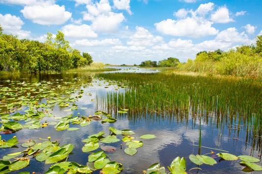 De Everglades.