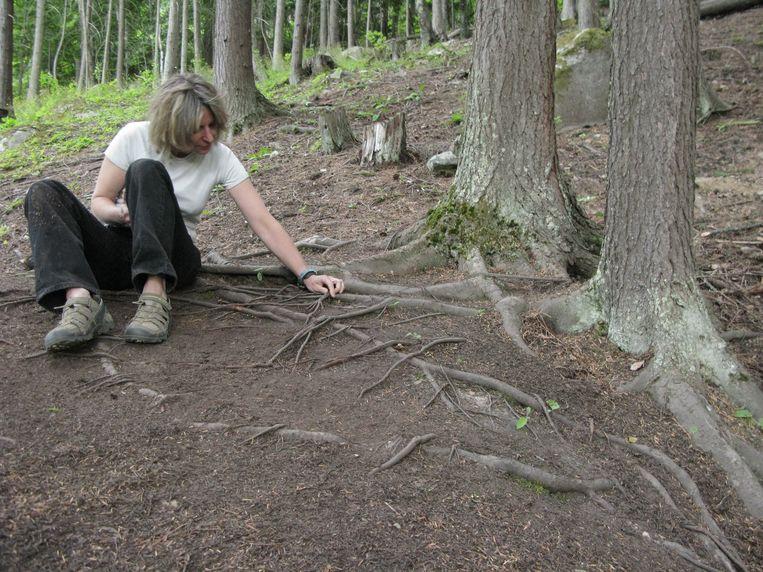 'Bossen zijn intelligent. Bomen waarschuwen elkaar zelfs voor gevaar' Beeld HUMO