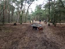 Geen inspraak beleid beheer Sonse bossen