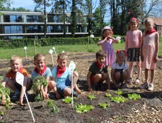 """Kinderen De Papaver hebben eigen moestuin: """"Zaaien in derde kleuterklas, oogsten in eerste leerjaar"""""""