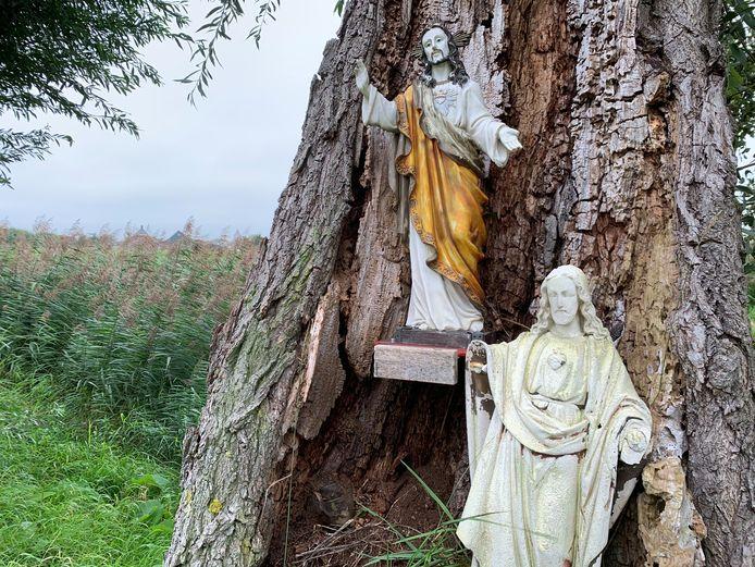 Twee Jezusbeelden in een holle knotwilg bij het Schoonrewoerdse Wiel van Bassa.