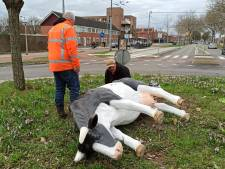 Gesloopte kunstkoeien terug op rotonde in Arnhem-Zuid