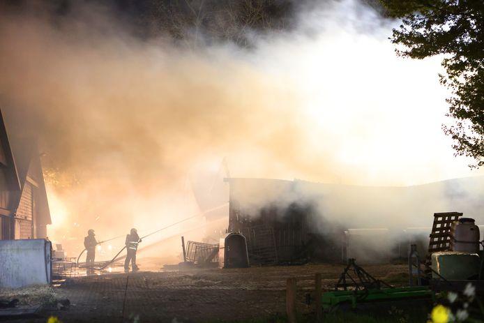 Voor een veulen en een kalf kwam hulp van de brandweer te laat: zij overleden.