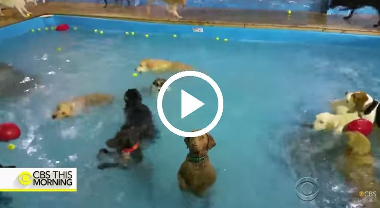 hond-in-zwembad.jpg