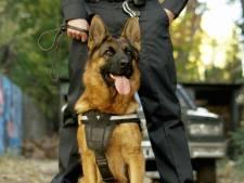 Agressieve Tilburger verzet zich tegen aanhouding, politiehond bijt in zijn linkerbovenbeen