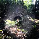 """Een spinnenweb dat Lianne Stevens fotografeerde. ,,Het licht viel nét goed en door mijn ervaring wist ik inmiddels vanuit welke hoek ik het web het mooiste kon fotograferen."""""""