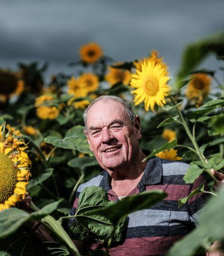 Chris Blij maakt iedereen blij met een strook van 230 meter aan zonnebloemen