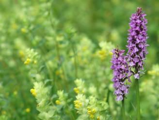 """Natuurpunt Rupelstreek lanceert samenaankoop: """"Moedigen Rumstenaren aan om 'levende tuinen' te creëren"""""""