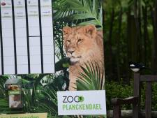 'Is het onze schuld dat ontsnapte leeuwin Rani is doodgeschoten?'