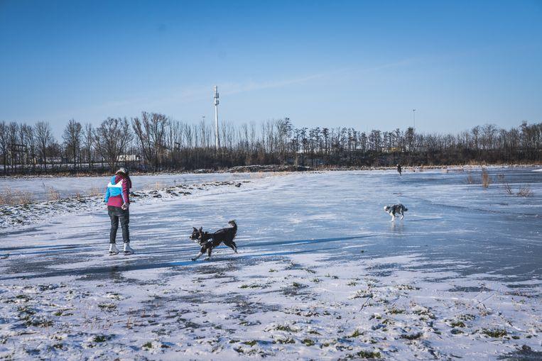 Veel mensen trokken het ijs op in de Gentbrugse Meersen, maar de komende dagen wordt het opnieuw warmer. Beeld Wannes Nimmegeers
