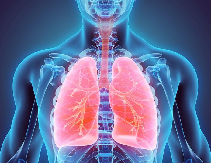 3D illustratie van de longen.