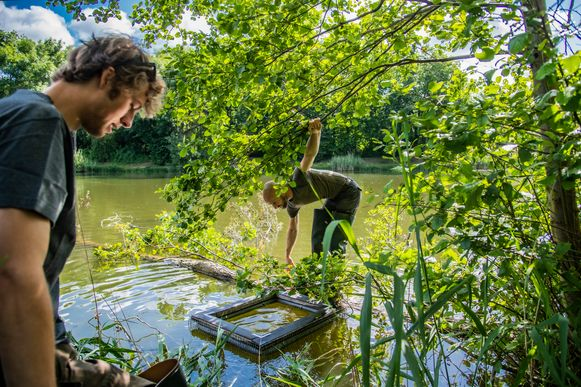 Medewerkers van de vzw Rato kwamen een kooi plaatsen om de exotische schildpadden te kunnen vangen.