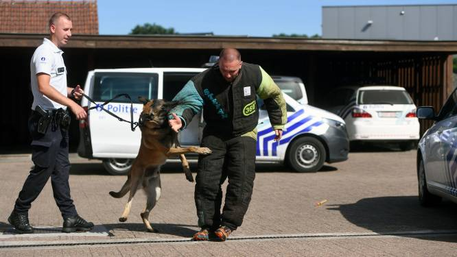 Hondenpatrouille vat inbreker in Rotselaar