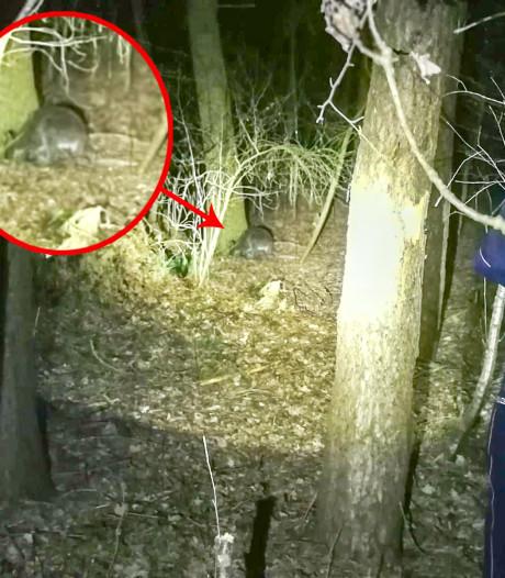 Watervlugge kangoeroe ontsnapt aan Duitse hulpdiensten