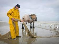 Les pêcheurs aux crevettes à cheval d'Oostdunkerque en deuil