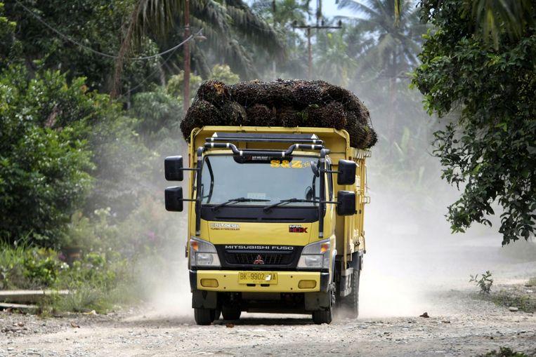 De oogst palmvruchten wordt naar een fabriek gebracht in Tamiang, Atjeh, Indonesië. Beeld EPA