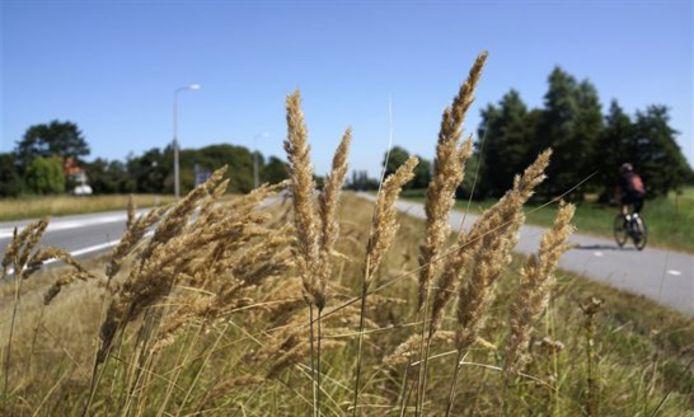 De provincie Zuid-Holland beheert 674 kilometer aan provinciale wegen en bermen.