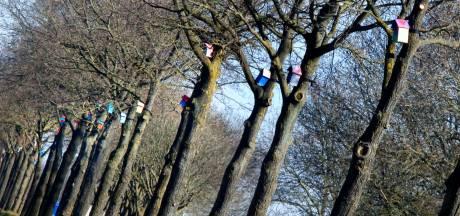 West Betuwe bindt de strijd aan met de 'jeukrups' door nestkastjes en biologisch middel in te zetten