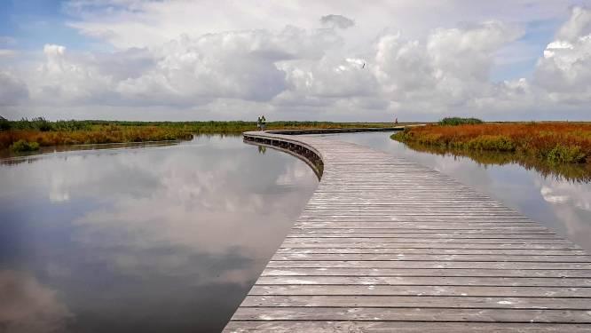 Al na één jaar explodeert natuur op kunstmatige eilanden Marker Wadden