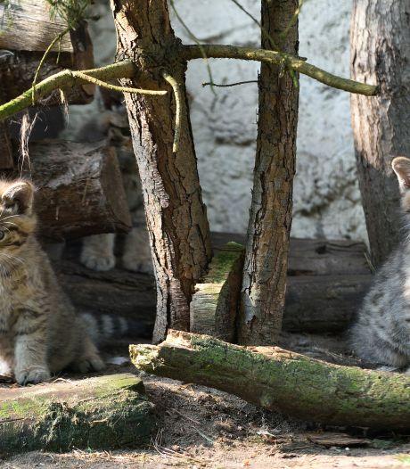Twee pluizige katjes duiken op in Tierpark Nordhorn