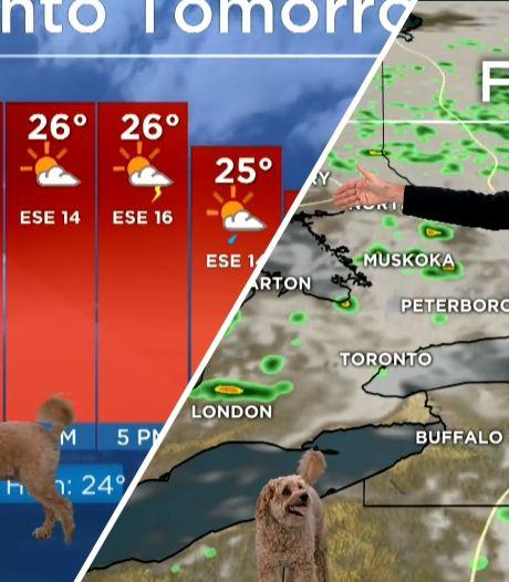 Hondje van Canadese weerman steelt show tijdens uitzending