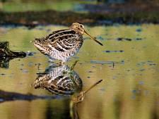 Vogelaars beboet wegens betreden verboden terrein