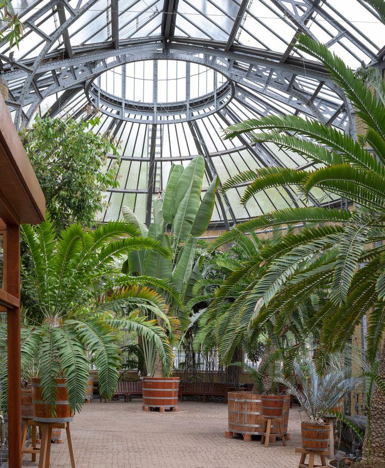 De botanische tuin van Amsterdam heeft dringend steun nodig, het liefst gaan ze zo snel mogelijk weer open.  Beeld Suzan Baars/Hortus Botanicus Amsterdam