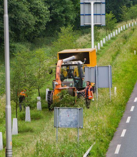 Vrees komt uit: 500 bomen Witte Lint in Zutphen moeten tegen de vlakte