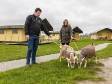 Tijd over voor toeristen na komst melkrobot op boerderij Kamperzeedijk