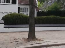 District Antwerpen vernieuwt voetpaden Palmenlaan