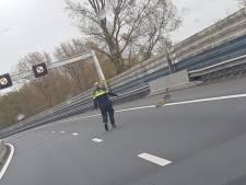 Politie zet A8 af om overstekende ganzen
